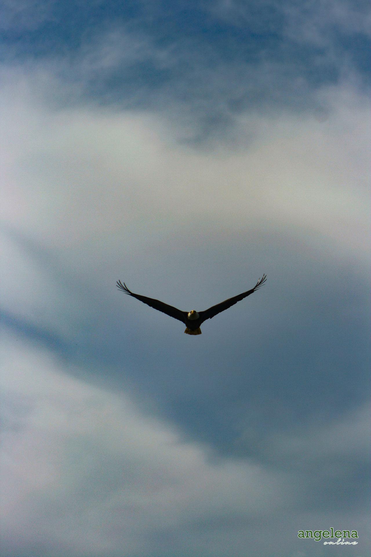 America Eagle Flight