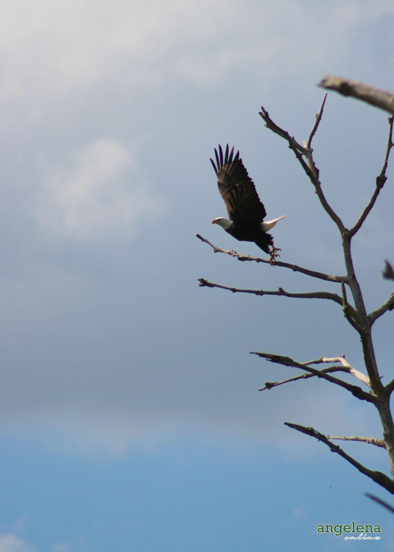 American Eagle Florida