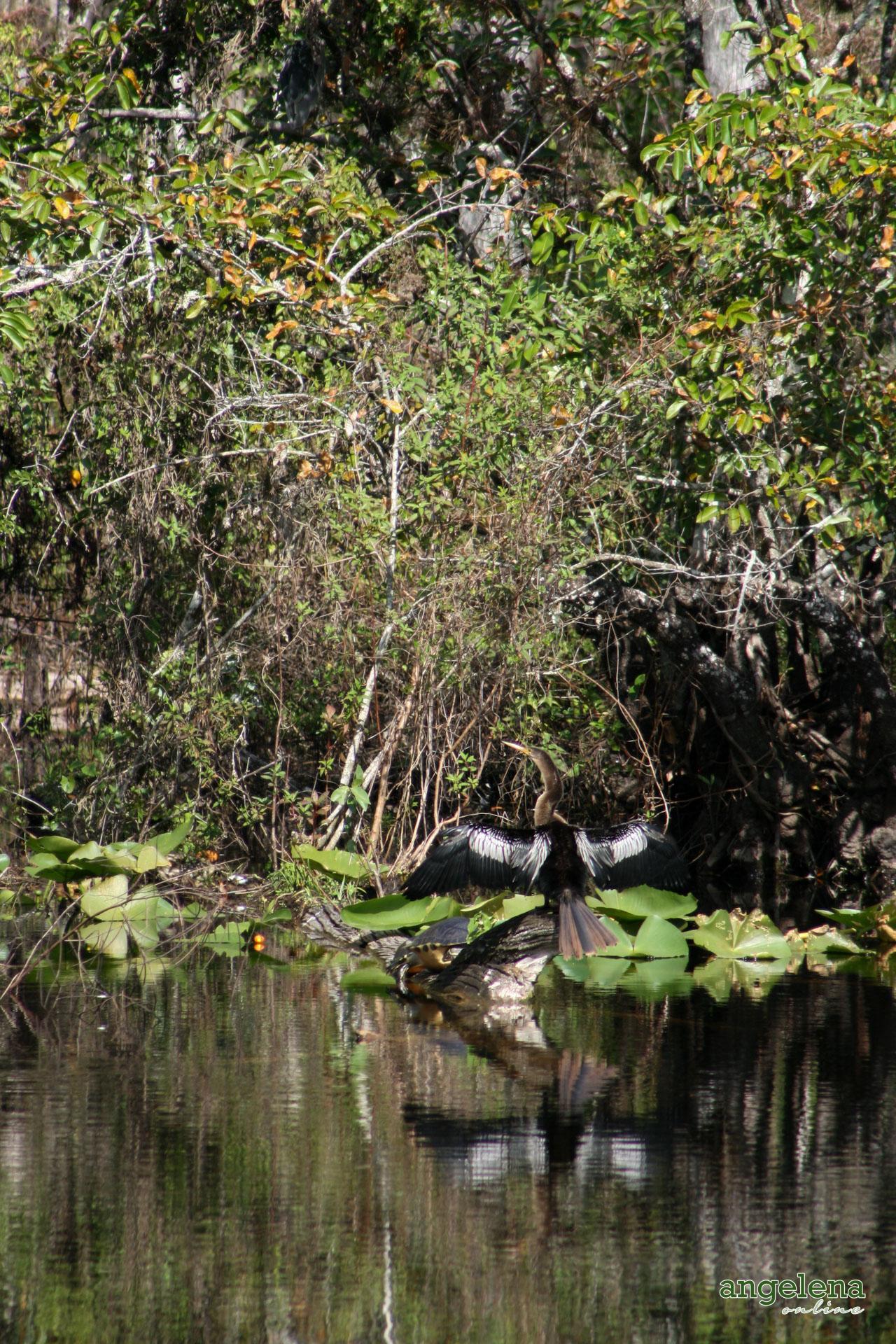 Basking Bird Texas