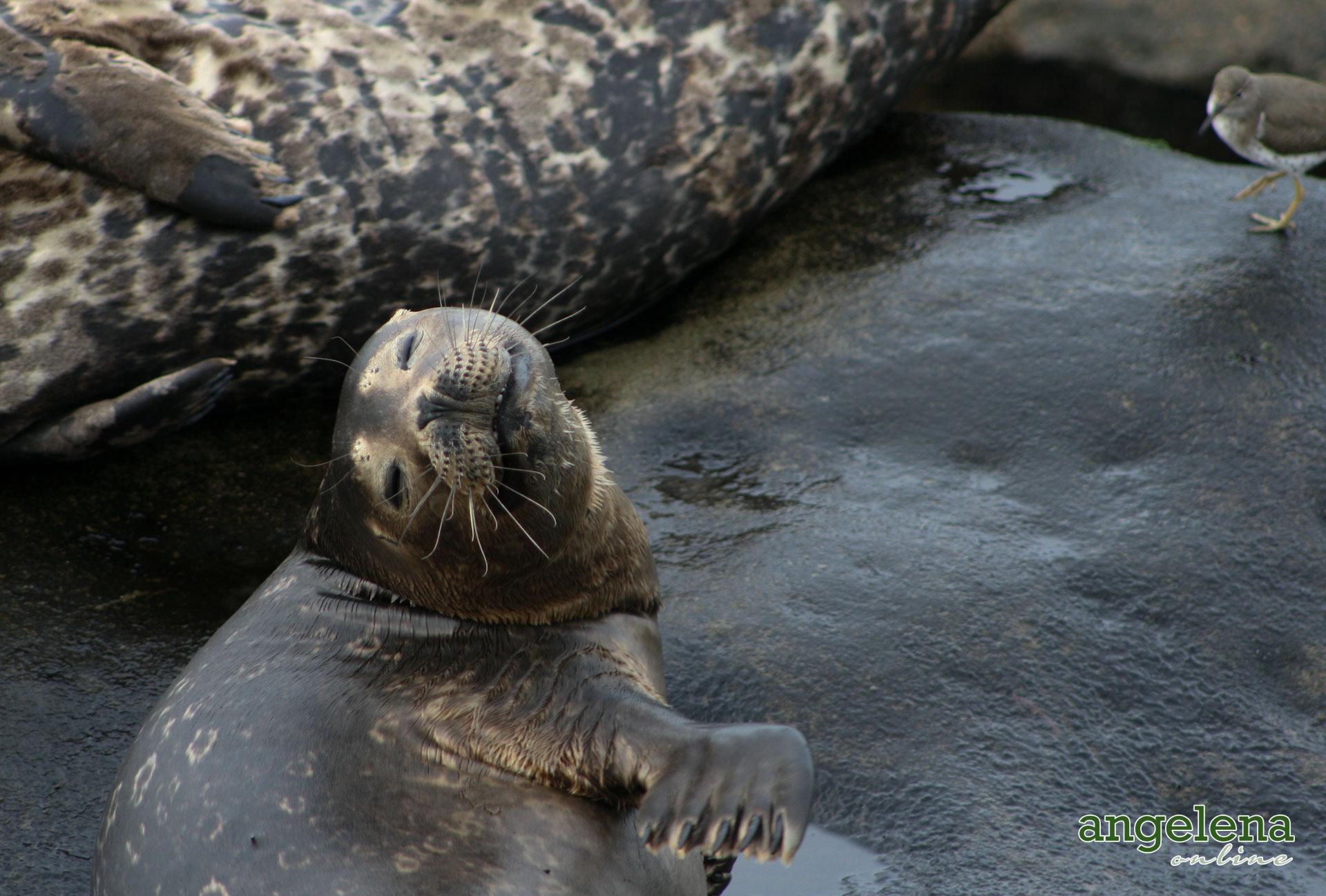 Happy Seal San Diego
