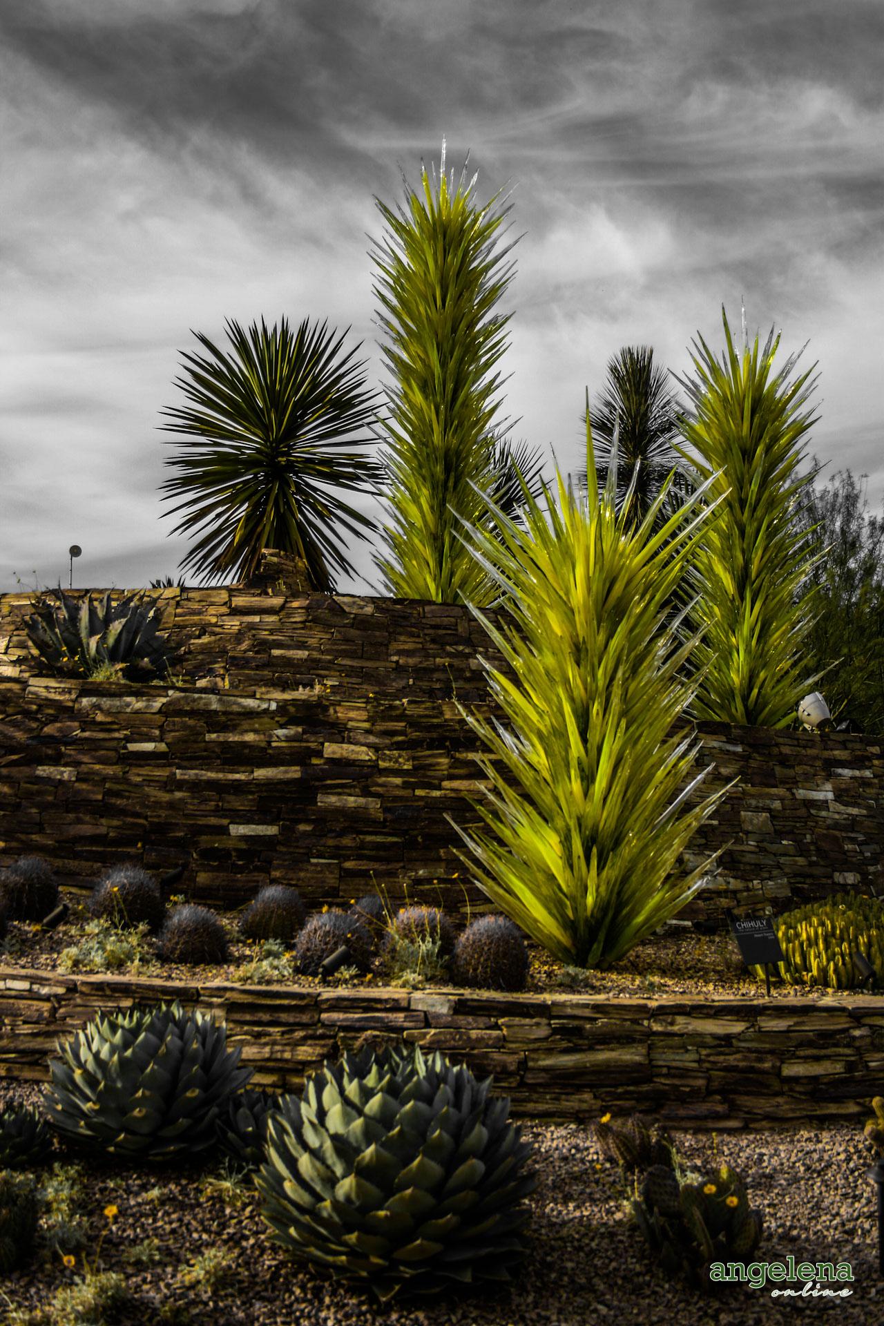 Glass Cacti