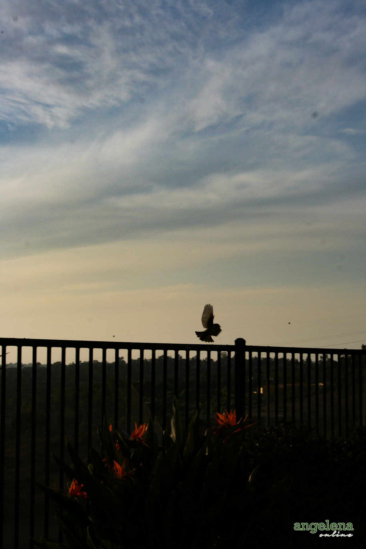 San Diego Bird