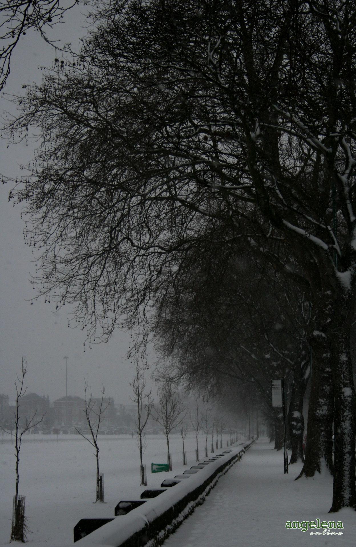Snowy Forest Rec Nottingham